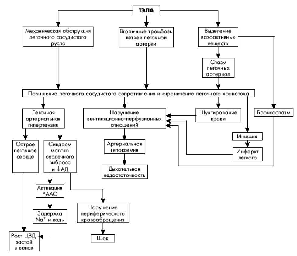 Схема развития ТЕЛА