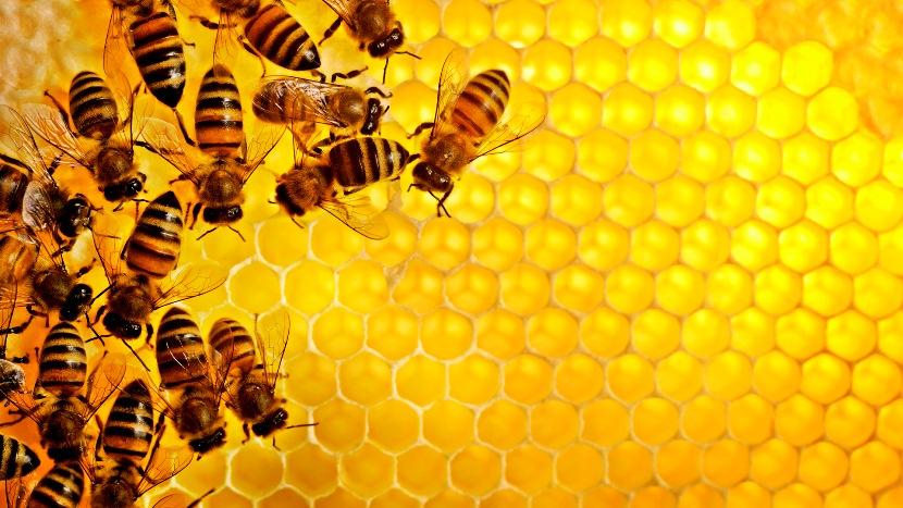 Воск пчелиный от варикоза - его полезные свойства