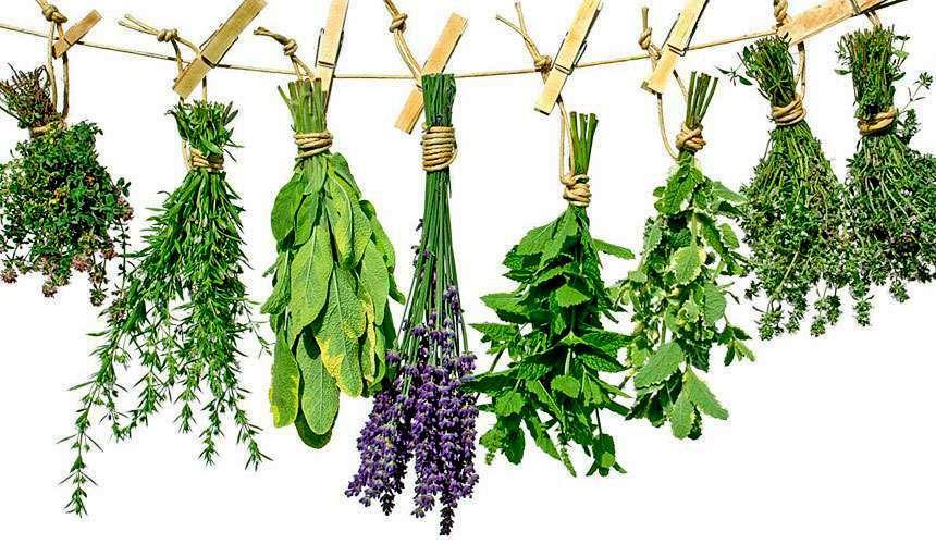 Травы при лечении и профилактики фарикоза - народные рецепты