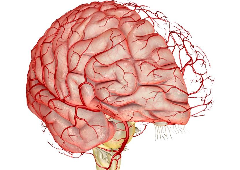 cerebralniy-ateroskleroza-lechenie8