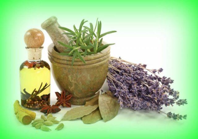 растения снижающие уровень холестерина