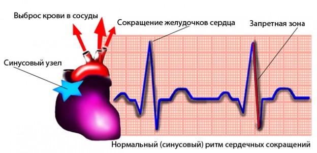 Говоря о нормальном сердечном ритме, необходимо иметь ввиду, что для него характерна частота от 60 до 90 ударов сердца в минуту