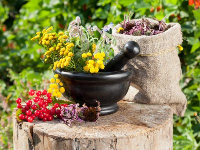 Из трав можно выделить пустырник и боярышник, валериану и шиповник. С валерианой желательно принимать успокаивающие ванны