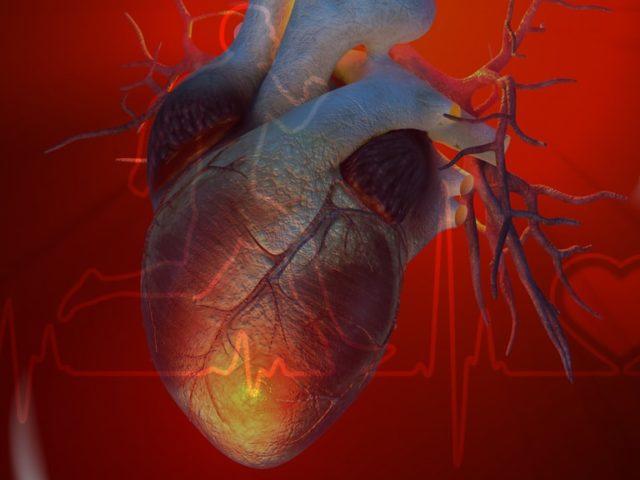 Рубец – это атрофированная и огрубевшая соединительная ткань