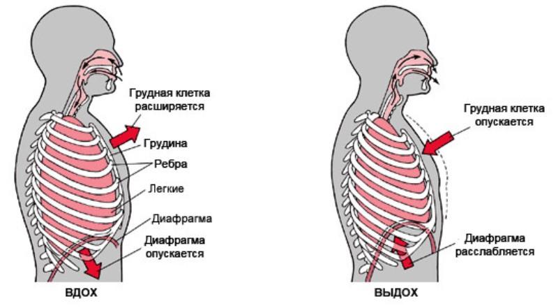 Процесс дыхания у человека