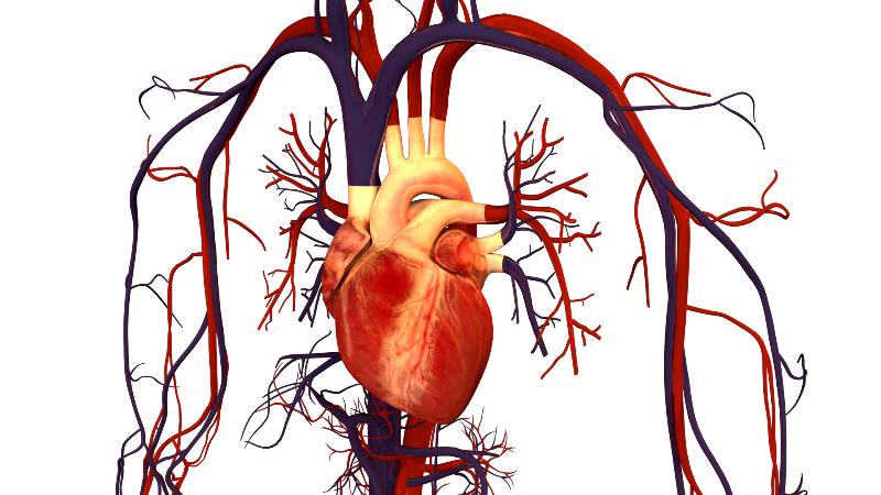 Курение негативно влияет на всю сердечно-сосудистую систему