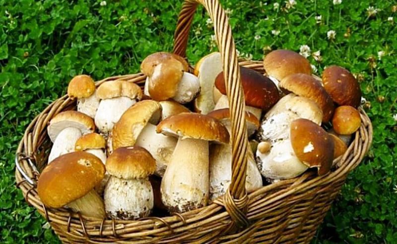 Лесные грибочки